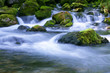 Leinwandbild Motiv forest stream