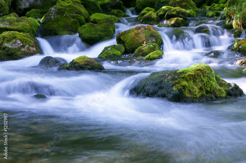 forest stream - 1202987