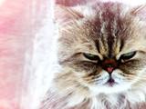 pensive mood poster
