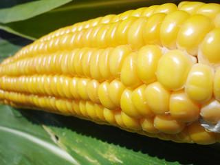 epi de maïs 2