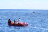 whale watching from an inflatable boat poster