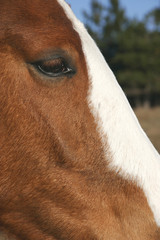 close up of horse head