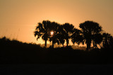 sunset with palmetto palm trees in foreground poster