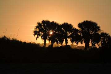sunset with palmetto palm trees in foreground