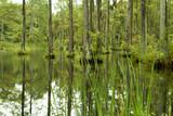 blackwater swamp poster