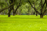 trees and meadow in park poster