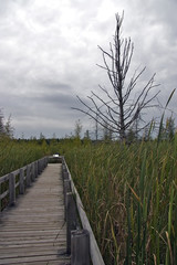 boardwalk into the bog