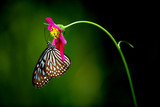 tropical rainforest butterfly - 1228306
