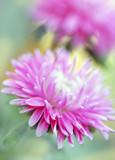 pastel flower poster