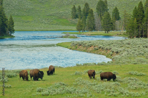Foto op Aluminium Buffel yellowstone bison