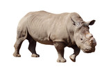 rhinoceros with cut horn poster