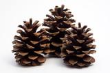 three big pine cones poster