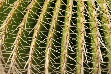 cactus closeup