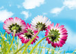 canvas print picture spring is here