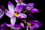 orchids - 1241133