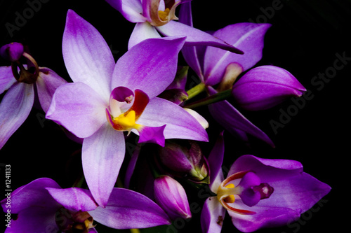 Fotobehang Orchidee orchids