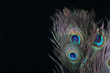 peacock feather bakkground