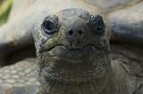 giant tortois poster