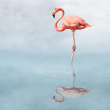 flamingo in pond - 1247581