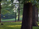 sunlit trees in boston common poster