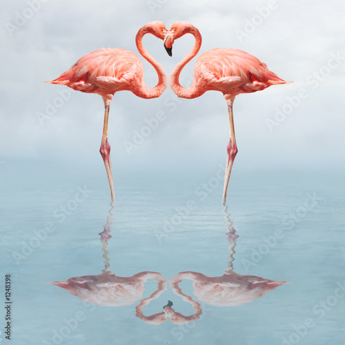 Fotobehang Flamingo making love
