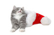 christmas kitten 2