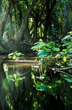 a river in a tropical forest in kauai, hawaii poster
