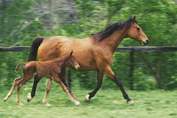 mother horse and three day old colt.