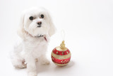 puppy with christmas ornaments poster