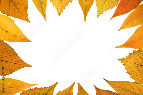 fall background