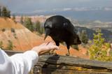 a suspicious raven poster
