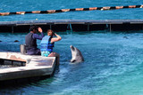 man and woman giving order to dolphin poster