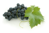 Fototapety blue grape cluster