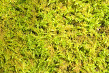 moss carpet in the sun poster