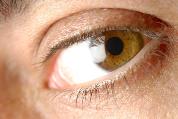 brown eye 1