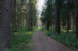path in the summer forest 3