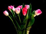 vase full of tulips poster