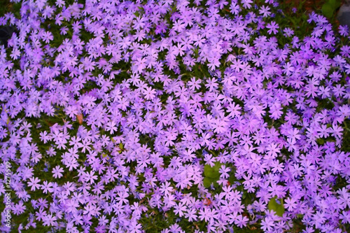 purple flower cover