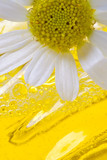 foam for a bath with camomile poster