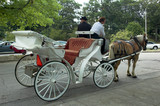 horse carriage in park poster