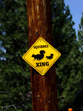 squirrel crossing poster