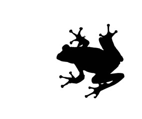 treefrog isolated over white by clipping path