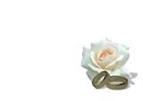 eheringe und weiße rose i love you-gravur poster