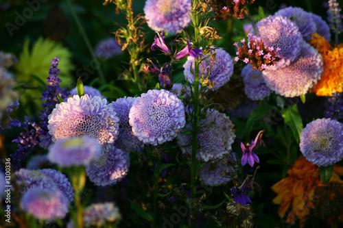 harmony in lilac © Nadia Ivanova