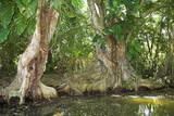 mangrove swamp poster