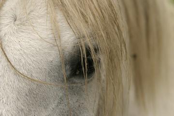 horse eye and mane