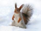 surprised squirrel poster