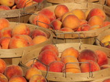 bushels of peaches