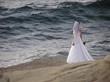 bride on the edge  of ocean