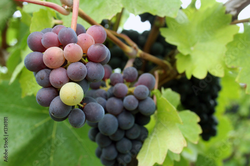 tiny grape cluster
